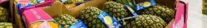 Groothandel AGF Groenten, Fruit en Exoten